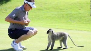 Monkeying around in South Africa